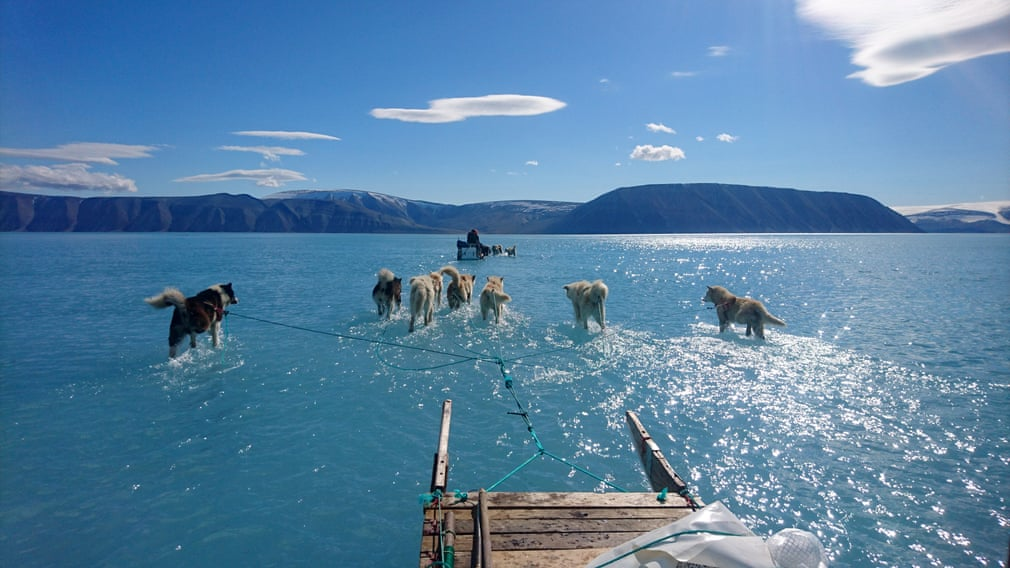 Sled dogs make their way in northwest Greenland with their paws in melted ice water. (AP)