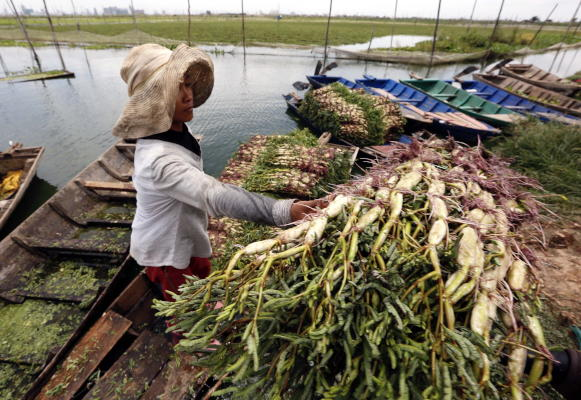 A Cambodian woman stacks produce at a floating vegetable farm at a lake on the outskirts of Phnom Penh, Cambodia, 22 August 2019. (EPA)