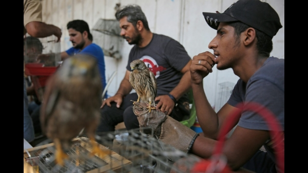 An Iraqi vendor holds a falcon at al-Ghazal pet market in Baghdad, Iraq  AFP / AHMAD AL-RUBAYE