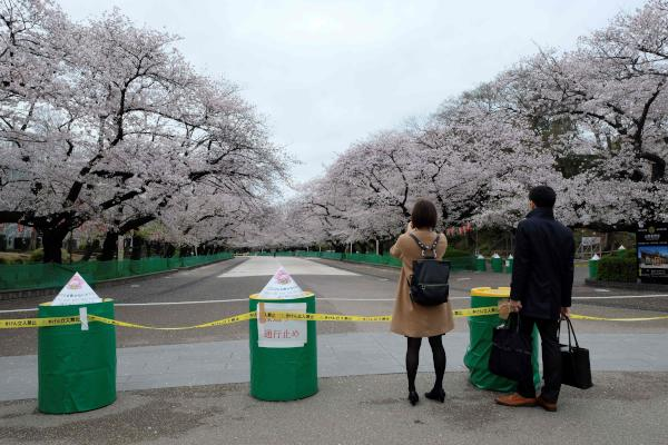 A 'Closed road' notice is seen, amid concerns of the COVID-19 coronavirus, as a couple looks at the cherry blossoms at Ueno park in Tokyo on March 28, 2020. (AFP)