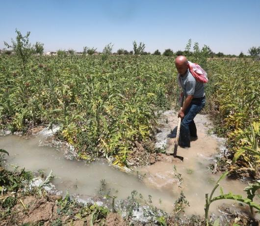Eastern Ghouta Farmers Try to Bring Orchards Back to Life