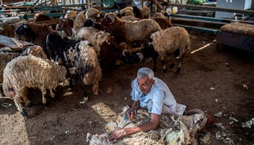 Cairo Looks to Curb Street Sheep Slaughter for Eid Holiday
