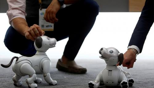 Robotic Dog to Detect Weapons, Explosives