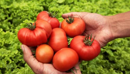 Foods Wreck Anti-Cancer Properties of Tomato Sauce