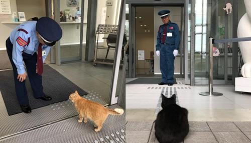 2 Cats Spend 2 Years Trying to Get into Japanese Museum