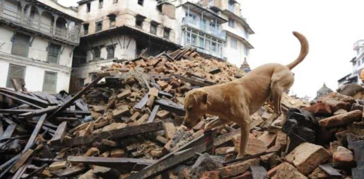 Dog-Like Device Developed to Rescue Disaster Victims