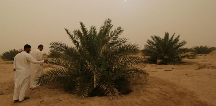 Kuwaiti Investor Returns to Iraq with a Project of Date Palm Groves, Natural Reserve