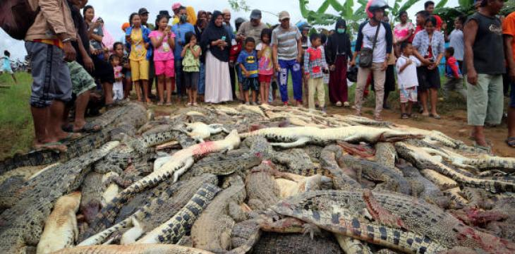 Indonesia Mob Kills Hundreds of Crocodiles in 'Revenge' for Man's Death