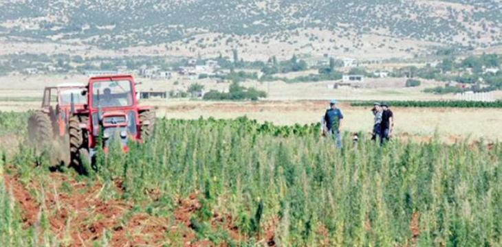 Legalizing Cannabis Growing Presents New Opportunities for Lebanon's Economy