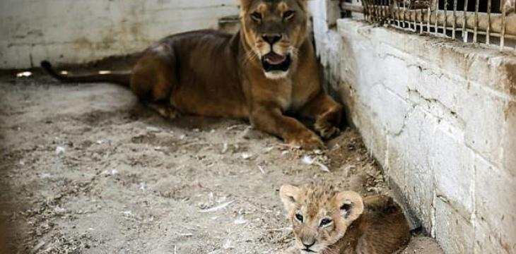 Cramped Gaza Zoo Reopens, Only Months After Closure