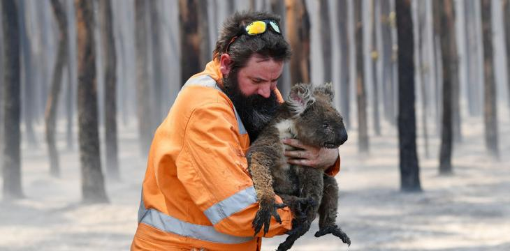 Australia's Wildlife Threatened by Feral Animals after Bushfires