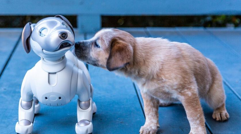 Image result for robot dog""