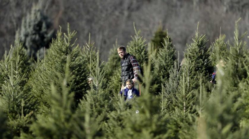 Remnants of Christmas Trees to Produce