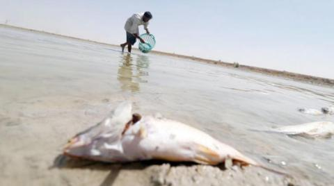 Toxic Mix of Polluted, Salty Water in Iraq's Basra