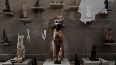 Egypt Says it Has Unearthed Large Animal Mummy, Likely a Lion